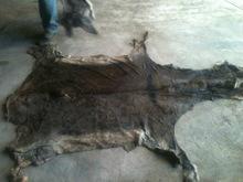 Wet Salted Donkey Hides 1