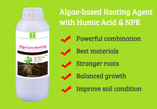 Alga Core Rooting 1
