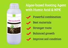 Alga Core Rooting