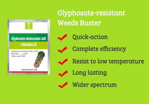 Glyphosate Ammonium Salt 59.5%+Dicamba 10.5% SG 1