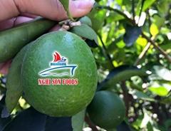 Seedless Lime whatsapp 0084 986 365 621