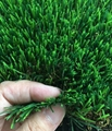 landscape grass 2