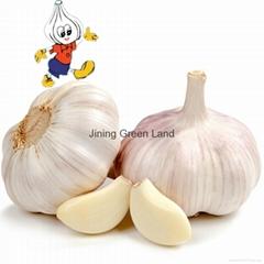 High Quality Fresh Normal White Galic Purple Garlic Red Garlic