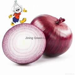 Fresh red & yellow onion from china