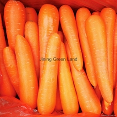 fresh carrots from china