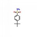 对叔丁基苯磺酰胺 3