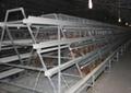 供應階梯式雞籠