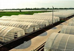 low cost Commercial greenhouse