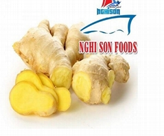 Fresh Young Ginger For Sale From Viet Nam