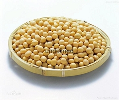 yellow soybeans