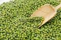 green mung beans 1