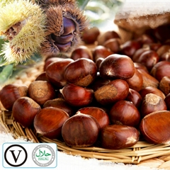 New Crop and best quality Hebei Kuancheng Fresh Chestnuts