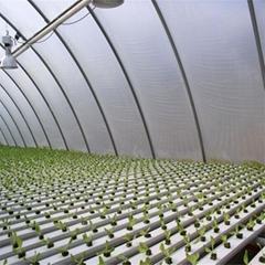 Greenhouse commerical Hydroponics NFT Flat Hydroponics
