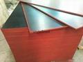 建筑覆膜胶合板 3