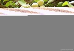 銀杏植物提取物