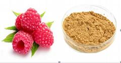 Raspberry Extract (Rubus idaeus L.)