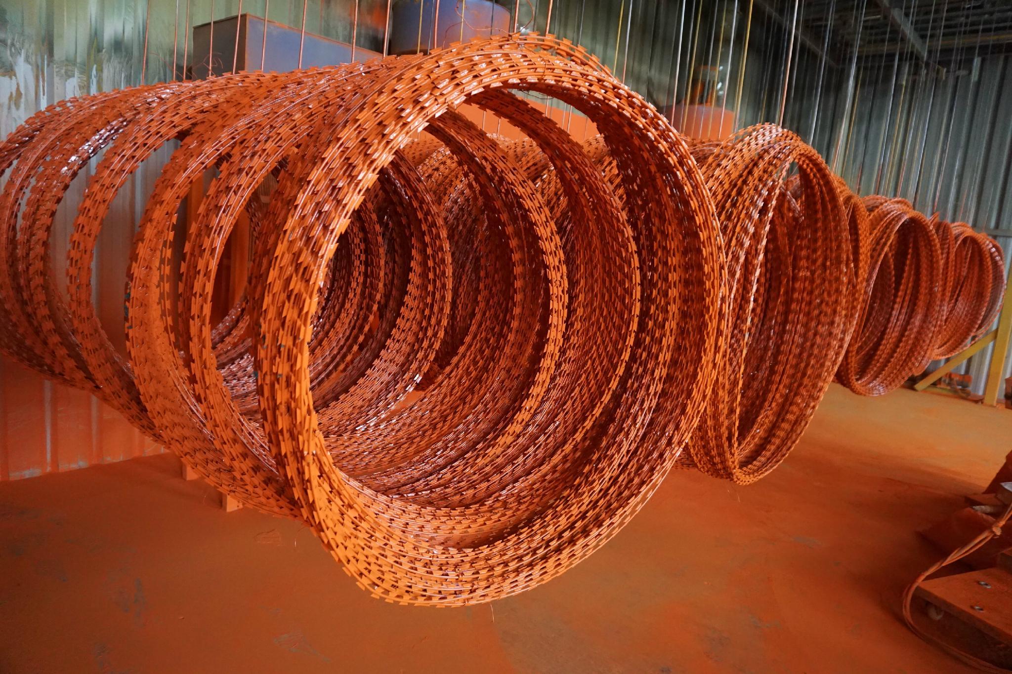Hot Dipped Galvanized Razor Barbed Wire 4