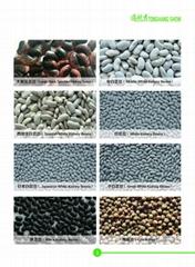 Beans Millets