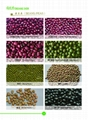 Beans Millets 2