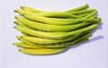 黃花菜種苗 3