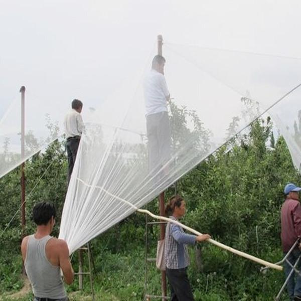 HDPE White Color Hail Protection Net 4
