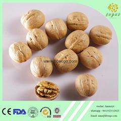 2017 Crop walnut in shell