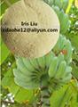 氨基酸螯合鈣硼 全水溶 香蕉專用有機肥料 2