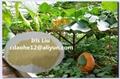 復合氨基酸粉45% 農用氨基酸