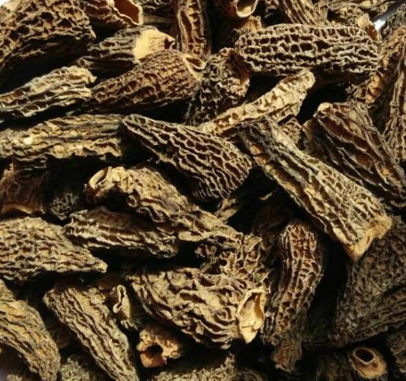Dried Morchella Esculenta 1