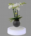 360 sping maglev floating levitation  air bonsai tree for deocr gift