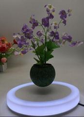 oval led light maglev floating levitating flying air bonsai tree for toys decor