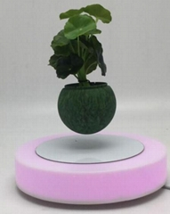red led light magnetic floating levitating planter bonsai tree for gift 0-500g