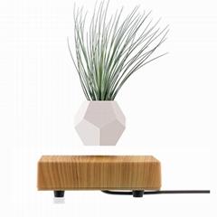 wooden base flyte levitaiton air bonsai pot planter tree