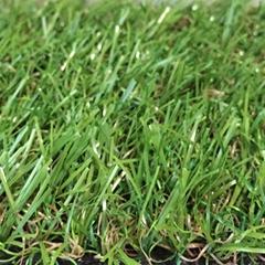 LEO85 courtyard lawn