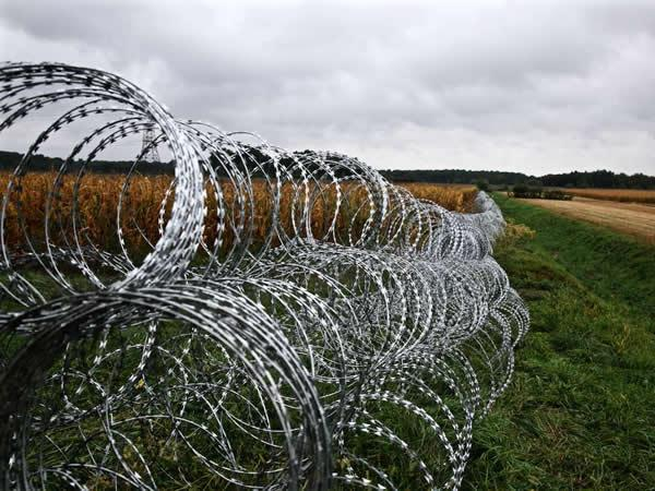 Razor Barbed Wire 4