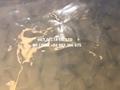 Pure Nature DICED ALOE VERA fresh extract (Linda Whatsapp +84 982 386 675) 2