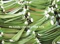 Pure Nature DICED ALOE VERA fresh extract (Linda Whatsapp +84 982 386 675) 3