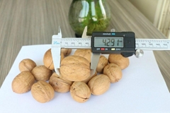 New Crop Sinkiang Walnut Xin 2 for Sale
