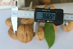 New Crop Northern Walnut Xiangling for Sale