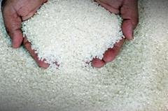 Organic White Japonica Rice