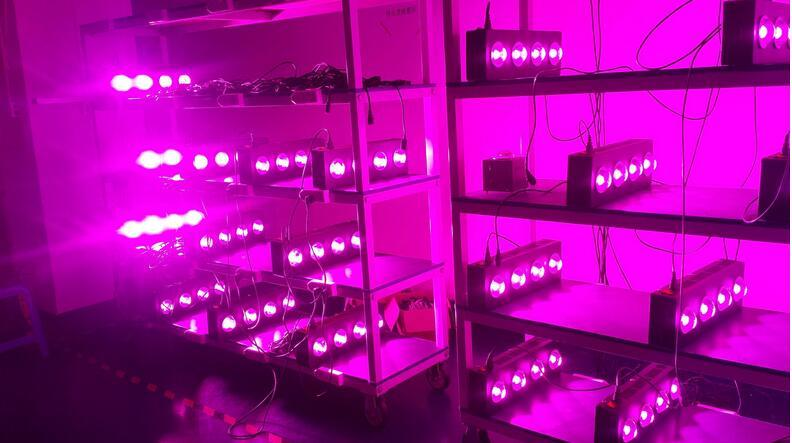 250W  COB LED Grow Light  9