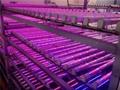 T8-18W LED tube grow light(Led Spectrum:Red:Blue (8:1)) 3