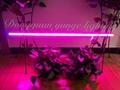 T8 double strips led nurturing lights flower potted light Vegetable fill light 3