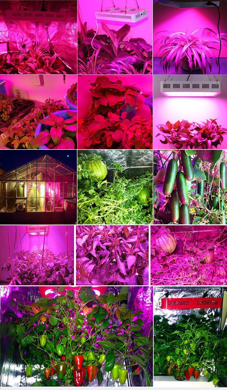 1500W LED plant grow light,high-power led growth,COB grow panel 8
