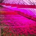 1500W LED plant grow light,high-power led growth,COB grow panel 7
