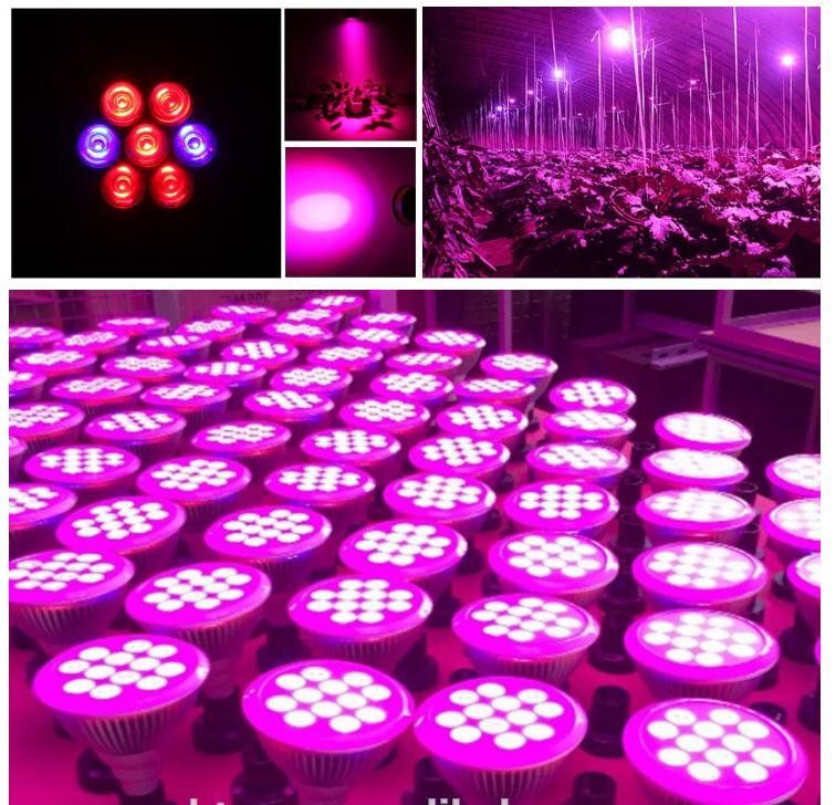 24W LED plant grow light,ledspotlightgrowth,high-Power Led COB light 7