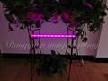 6W LED plant grow lamp,T5 tube grow light, Red blue light plant growth lamp. 2