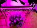 6W LED plant grow lamp,T5 tube grow light, Red blue light plant growth lamp. 3