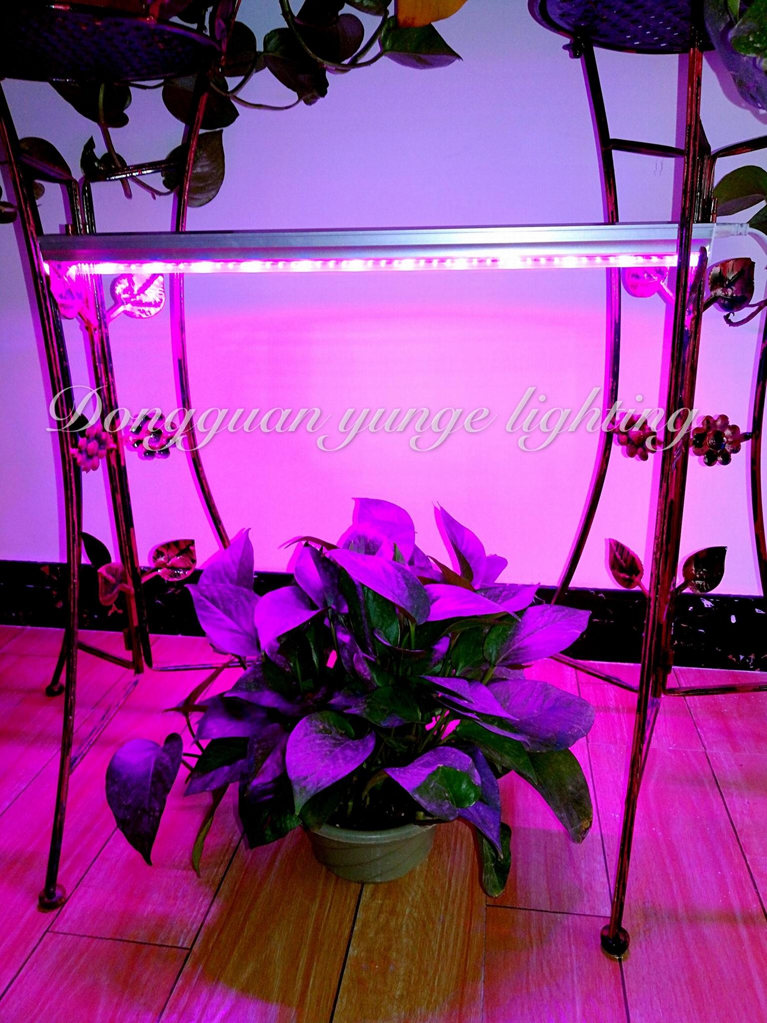 6W LED plant grow lamp,T5 tube grow light, Red blue light plant growth lamp. 1