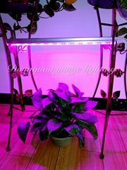 6W LED plant grow lamp,T5 tube grow light, Red blue light plant growth lamp.